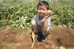 Patata di scavatura del ragazzo giapponese Immagine Stock