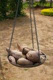 Patata dolce Fotografia Stock Libera da Diritti