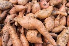 Patata dolce arancio organica fresca contro un fondo Immagini Stock