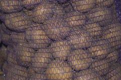 Patata en una rejilla Imagen de archivo libre de regalías
