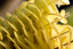 Patata espiral Foto de archivo