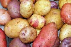 Patata fresca de la granja foto de archivo