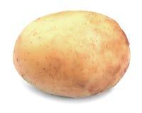 Patata orgánica, fresca, madura y cruda, en un fondo blanco Primer de la nueva patata Cosecha del verano de verduras Foto de archivo libre de regalías