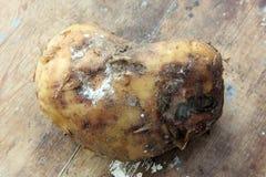 Patata putrefacta imagen de archivo