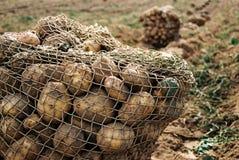 Patatas Fotografía de archivo libre de regalías