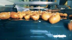 Patatas amarillas que mueven encendido la línea de la fábrica después de lavarse almacen de video