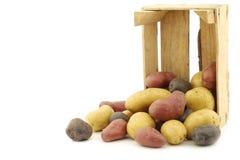 Patatas amarillas, rojas y púrpuras fotografía de archivo