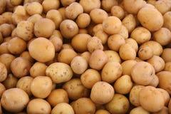 Patatas blancas Imagen de archivo libre de regalías