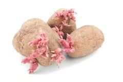 Patatas con los lanzamientos rosados Imagen de archivo