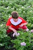 Patatas crecientes del adolescente del muchacho en jardín Fotos de archivo libres de regalías