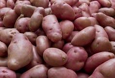 Patatas de Desiree Foto de archivo libre de regalías