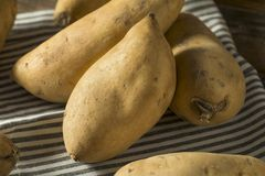 Patatas dulces blancas orgánicas crudas Imagen de archivo libre de regalías