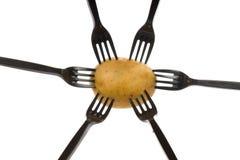 Patatas en bifurcaciones Fotos de archivo libres de regalías