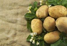 Patatas en el saco de la arpillera fotos de archivo