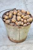 Patatas en la cesta después de cosechar Patatas crudas frescas Foto de archivo