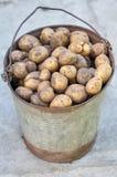 Patatas en la cesta después de cosechar Patatas crudas frescas Imagenes de archivo