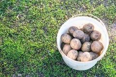 Patatas en un cubo Fotografía de archivo
