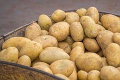 Patatas en una carretilla a transportar Foto de archivo libre de regalías