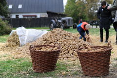 Patatas en una cesta foto de archivo