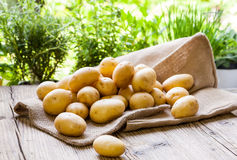 Patatas frescas de la granja en un saco de la arpillera Foto de archivo
