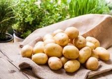 Patatas frescas de la granja en un saco de la arpillera Imagenes de archivo