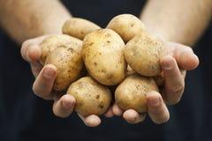 Patatas frescas en las manos de los granjeros Foto de archivo libre de regalías