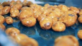 Patatas lavadas que mueven encendido una línea de la fábrica en una instalación almacen de video