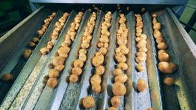 Patatas limpiadas clasificadas en un transportador móvil en una fábrica metrajes