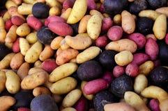 Patatas multicoloras del pececillo en un mercado de los granjeros al aire libre. Imagen de archivo