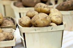 Patatas pelirrojas Imagen de archivo libre de regalías