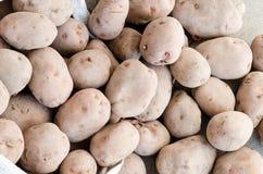 Patatas recogidas Fotografía de archivo
