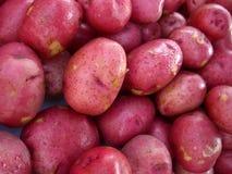 Patatas rojas Imagenes de archivo