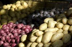 Patatas rojas amarillas púrpuras Imagen de archivo libre de regalías
