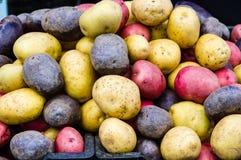 Patatas rojas, blancas y azules Imagen de archivo libre de regalías