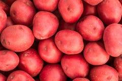 Patatas rojas sin procesar Imagenes de archivo