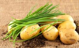 Patatas y cebolletas Fotos de archivo libres de regalías