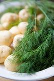 Patatas y eneldo frescos fotos de archivo libres de regalías