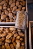 patate Fotografia Stock Libera da Diritti