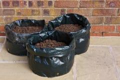 Patate che crescono nei sacchetti Fotografie Stock