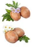 Patate con le foglie ed i fiori Fotografie Stock