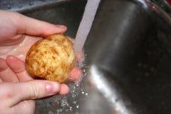 Patate di lavaggio Fotografia Stock Libera da Diritti