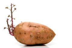 Patate douce Photos libres de droits