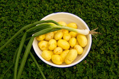 Patate e cipolla fresche Fotografia Stock