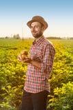 Patate felici della tenuta dell'agricoltore davanti al paesaggio del campo Fotografia Stock