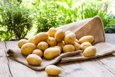 Patate fresche dell'azienda agricola su un sacco di iuta Fotografia Stock