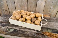 Patate fresche di eco Immagini Stock