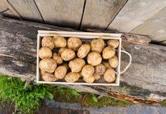 Patate fresche di eco Fotografia Stock