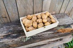 Patate fresche di eco Fotografie Stock