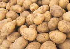 Patate fresche nel mercato Patate gialle Fondo delle patate Patate di verdure Fotografie Stock