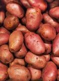 Patate grezze, priorità bassa dell'alimento Rosso organico crudo delle patate fresche Immagini Stock